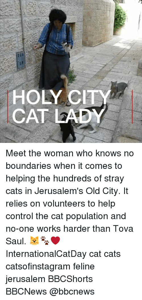 stray cats: HOLY CIT  CAT LADY Meet the woman who knows no boundaries when it comes to helping the hundreds of stray cats in Jerusalem's Old City. It relies on volunteers to help control the cat population and no-one works harder than Tova Saul. 🐱🐾❤️ InternationalCatDay cat cats catsofinstagram feline jerusalem BBCShorts BBCNews @bbcnews