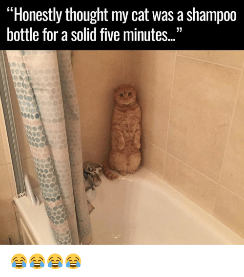 "mycat: ""Honestly thought mycat was a shampoo  bottle for a solid five minutes. 😂😂😂😂"