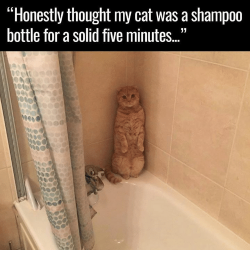 "mycat: ""Honestly thought mycat was a shampoo  bottle for a solid five minutes."
