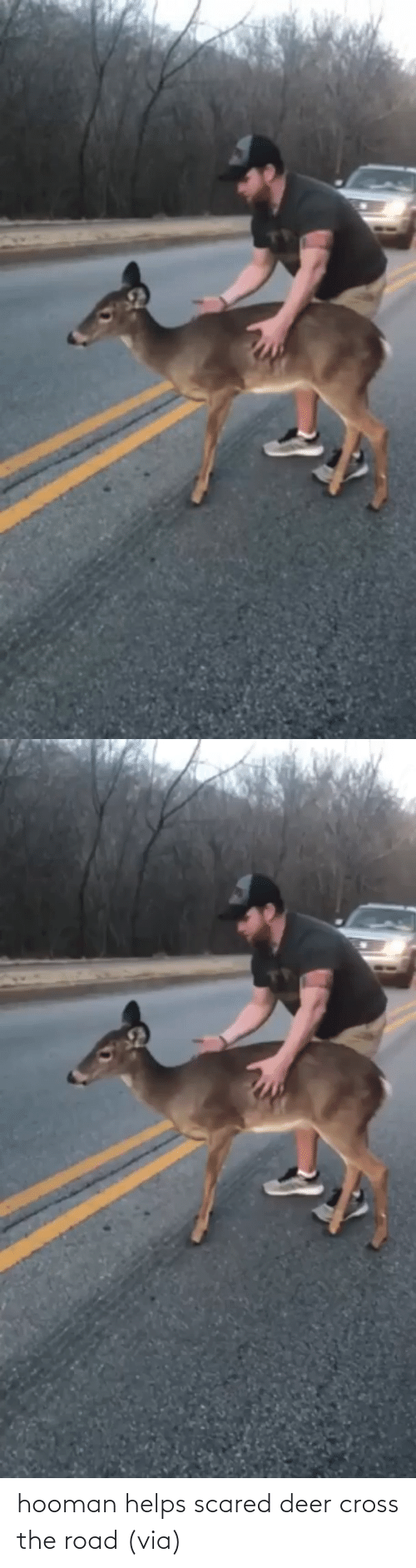 Helps: hooman helps scared deer cross the road (via)