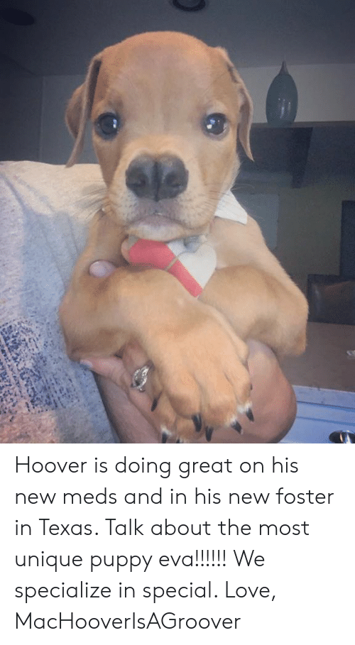 Love, Memes, and Puppy: Hoover is doing great on his new meds and in his new foster in Texas. Talk about the most unique puppy eva!!!!!! We specialize in special.   Love, MacHooverIsAGroover