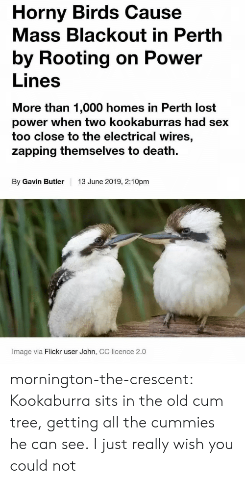 gavin: Horny Birds Cause  Mass Blackout in Perth  by Rooting on Power  Lines  More than 1,000 homes in Perth lost  power when two kookaburras had sex  too close to the electrical wires,  zapping themselves to death  By Gavin Butler  13 June 2019, 2:10pm  Image via Flickr user John, CC licence 2.0 mornington-the-crescent:  Kookaburra sits in the old cum tree, getting all the cummies he can see.  I just really wish you could not