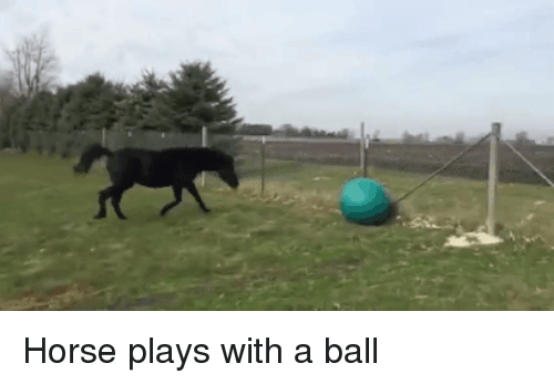Horse, Ball, and With: Horse plays with a ball