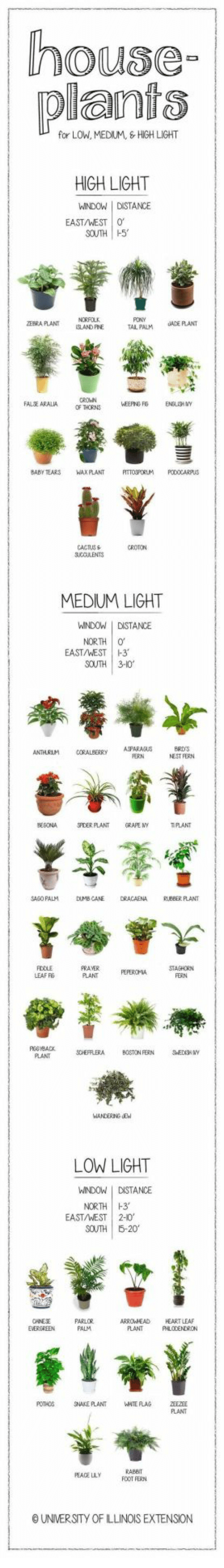 Illinois: house  plants  for LOW, MEDIUM, HIGH LIGHT  HIGH LIGHT  WINDOW I DSTANCE  EAST/WEST 0  SOUTH H5  EBRA PLANT  ISLAND FINE  PONY  TAL PALM UADEFLANT  FALJE ARALIA  OF THORNS  BABY TEARS WAX PLANT TOSPORLM ODOCARPUS  MEDIUM LIGHT  WINDOW I DISTANCE  NORTH  EAST/WEST  1-3.  SOUTH 3-10  ANTHURLM CORABERRY ASPARASUS  ERN  NEST FERN  MHPLANT  GRA氏NY  TPLANT  SAGO PALM DUMBCANE DRACAENA KUBBER PLANT  PRAVER  PLANT FEPEROMA STAGHORN  LEAF RG  FERN  SOHEFFLERA BOSTON FERN  PLANT  LOW LIGHT  WINDOWDISTANCE  NORTH H3  EAST/WEST |  2-10,  SOUTH 5-20  PARLOR  PALM  ARROWHEAD HEART LEA  PLANT  POTHOS SNAKE PLANT  RABEIT  FOOT FERN  PEACE LLY  O UNIVERSITY OF ILLINOIS EXTENSION