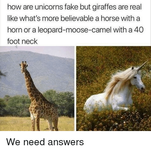 Believable: how are unicorns fake but giraffes are real  like what's more believable a horse with a  horn or a leopard-moose-camel with a 40  foot neck We need answers