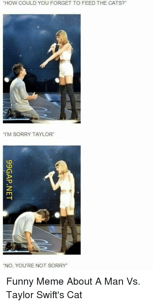 """Cats, Funny, and Meme: """"HOW COULD YOU FORGET TO FEED THE CATS?""""  """"I'M SORRY TAYLOR""""  """"NO, YOU'RE NOT SORRY"""" Funny Meme About A Man Vs. Taylor Swift's Cat"""