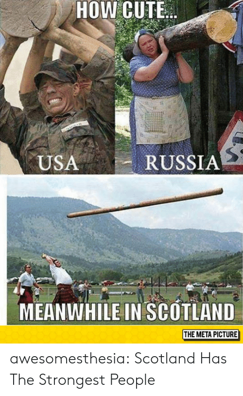 Scotland: HOW CUTE  RUSSIA  USA  MEANWHILE IN SCOTLAND  THE META PICTURE awesomesthesia:  Scotland Has The Strongest People