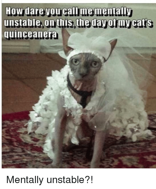 Cats, Quinceanera, and How: How dare y  unstable, on this, the day of my cat's  quinceanera Mentally unstable?!