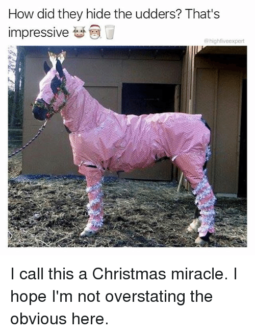 Christmas, Memes, and Hope: How did they hide the udders? That's  impressive  @highfiveexpert I call this a Christmas miracle. I hope I'm not overstating the obvious here.