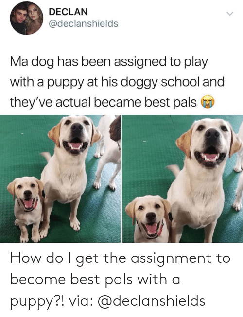 Get The: How do I get the assignment to become best pals with a puppy?! via: @declanshields