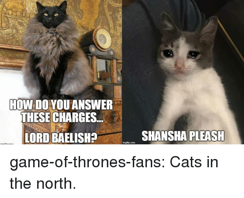 in-the-north: HOW DO YOU ANSWER  THESE CHARGES  LORD BAELISH?  SHANSHA PLEASH game-of-thrones-fans:  Cats in the north.