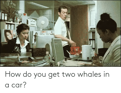 How Do You: How do you get two whales in a car?