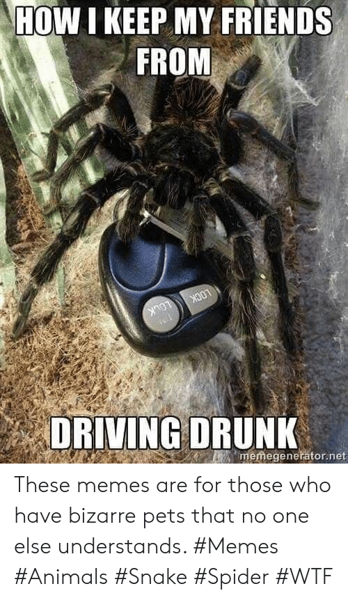 Who Have: HOW I KEEP MY FRIENDS  FROM  LOCK  LOCK  memegenerator.net  DRIVING DRUNK These memes are for those who have bizarre pets that no one else understands. #Memes #Animals #Snake #Spider #WTF