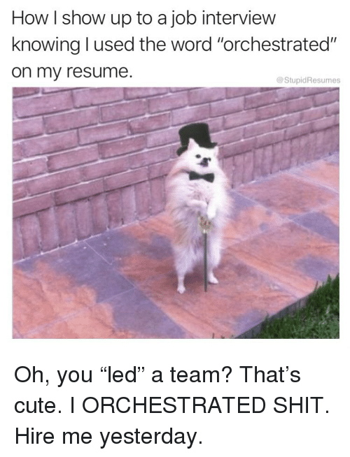 "Cute, Job Interview, and Memes: How I show up to a job interview  knowing l used the word ""orchestrated""  on my resume.  @StupidResumes Oh, you ""led"" a team? That's cute. I ORCHESTRATED SHIT. Hire me yesterday."
