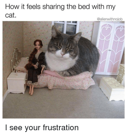 How, Cat, and Feels: How it feels sharing the bed with my  cat.  @alienwithnojob I see your frustration