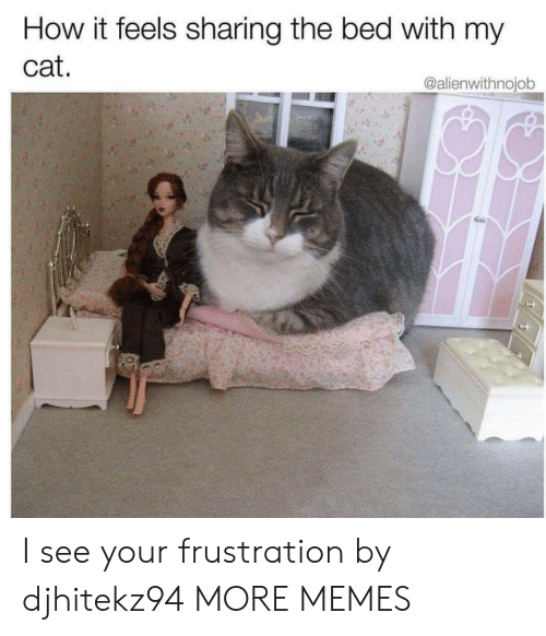 Dank, Memes, and Target: How it feels sharing the bed with my  cat.  @alienwithnojob I see your frustration by djhitekz94 MORE MEMES