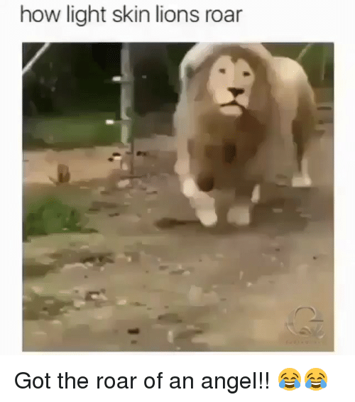Memes, Angel, and Lions: how light skin lions roar Got the roar of an angel!! 😂😂