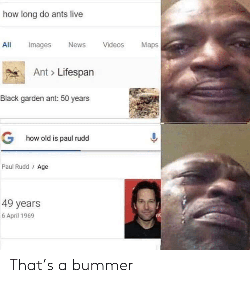 News, Videos, and Black: how long do ants live  All mages News Videos Maps  Ant Lifespan  Black garden ant: 50 years  G  how old is paul rudd  Paul Rudd / Age  49 years  6 April 1969 That's a bummer
