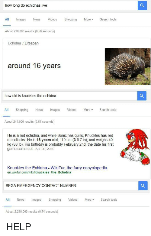 february 2nd: how long do echidnas live  All Images News VideosShopping MoreSearch tools  About 238,000 results (0.56 seconds)  Echidna / Lifespan  around 16 years  how old is knuckles the echidna  All Shopping News Images Videos More Search tools  About 241,000 results (0.61 seconds)  He is a red echidna, and while Sonic has quills, Knuckles has red  dreadlocks. He is 16 years old, 110 cm (3 ft 7 in), and weighs 40  kg (88 lb). His birthday is probably February 2nd, the date his first  game came out. Apr 26, 2016  Knuckles the Echidna WikiFur, the furry encyclopedia  en wikifur.com/wiki/Knuckles the Echidna  SEGA EMERGENCY CONTACT NUMBER  All News Images Shopping Videos MoreSearch tools  About 2,210,000 results (0.74 seconds) <p>HELP</p>