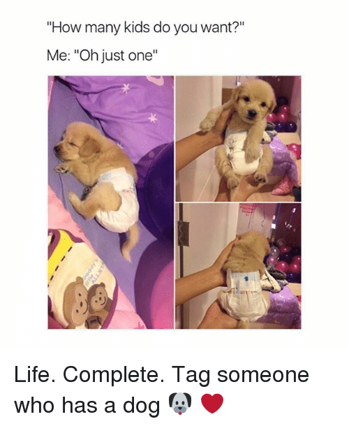 """how-many-kids: """"How many kids do you want?""""  Me: """"Oh just one""""  ·リ Life. Complete. Tag someone who has a dog 🐶 ❤️"""