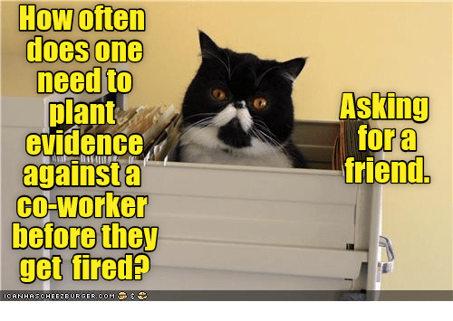 Asking, How, and Com: How often  does one  need to  plant  evidence  against a  cO-worker  before they  get fireda  Asking  for a  friend.  CANHAS. CHEEZBURGER.COM '