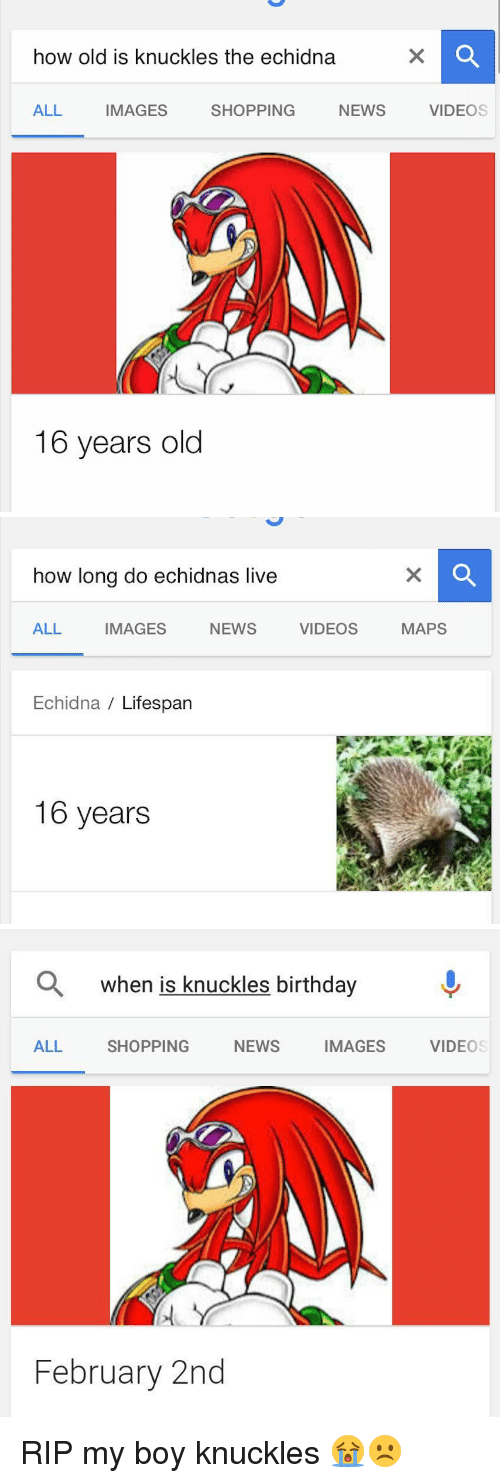 video mapping: how old is knuckles the echidna  ALL  IMAGES  NEWS  SHOPPING  16 years old  VIDEOS   how long do echidnas live  ALL  IMAGES  NEWS  Echidna Lifespan  16 years  VIDEOS  MAPS   a when is knuckles birthday  ALL SHOPPING  NEWS  IMAGES  February 2nd  VIDEOS RIP my boy knuckles 😭☹️