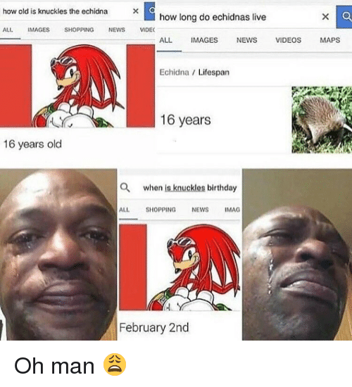 video mapping: how old is knuckles the echidna  how long do echidnas live  ALL IMAGES  SHOPPING  NEWS  VIDEC  ALL IMAGES  NEWS  VIDEOS  MAPS  Echidna Lifespan  16 years  16 years old  a when is knucklos birthday  ALL  SHOPPING  NEWS  IMAG  February 2nd Oh man 😩