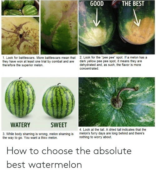 How To: How to choose the absolute best watermelon