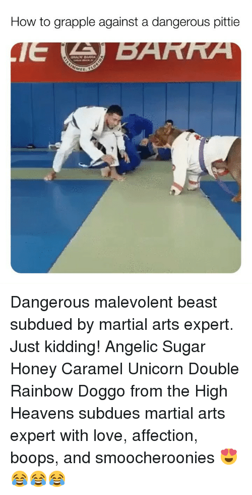 caramel: How to grapple against a dangerous pittie Dangerous malevolent beast subdued by martial arts expert. Just kidding! Angelic Sugar Honey Caramel Unicorn Double Rainbow Doggo from the High Heavens subdues martial arts expert with love, affection, boops, and smoocheroonies 😍😂😂😂