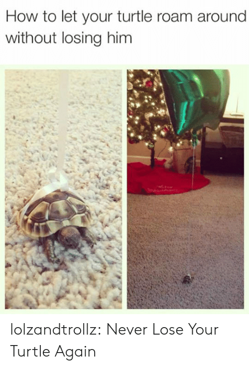 Tumblr, Blog, and How To: How to let your turtle roam around  without losing him lolzandtrollz:  Never Lose Your Turtle Again