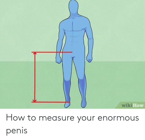 enormous: How to measure your enormous penis