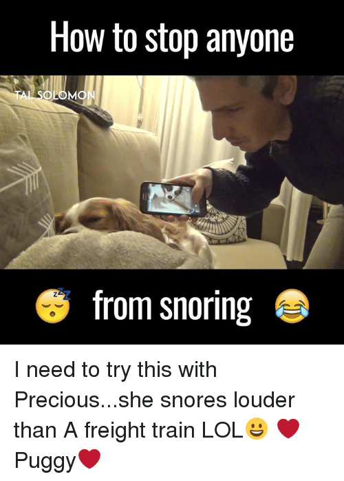 Memes, Precious, and Solomon: How to stop anyone  A SOLOMON  S from snoring I need to try this with Precious...she snores louder than A freight train LOL😀 ❤Puggy❤