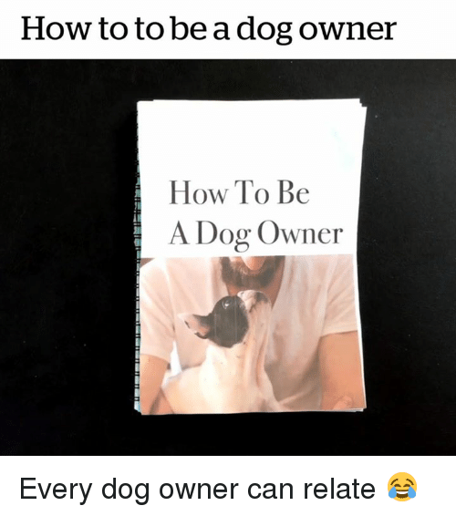 Dog Owner: How to to be a dog owner  How To Be  A Dog Owner Every dog owner can relate 😂