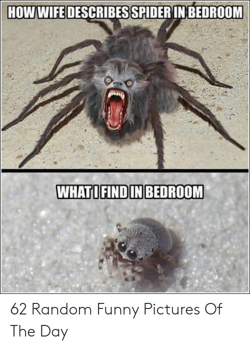 Funny Pictures Of: HOW WIFE DESCRIBES SPIDERIN BEDROOM  WHATOFINDIN BEDROOM 62 Random Funny Pictures Of The Day
