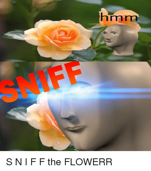 iff: hrmma  IFF <p>S N I F F the FLOWERR</p>