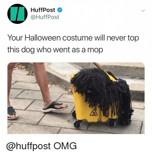 Huffpost: HuffPost  @HuffPost  Your Halloween costume will never top  this dog who went as a mop @huffpost OMG