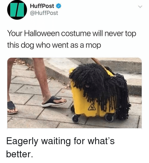 Huffpost: HuffPost  @HuffPost  Your Halloween costume will never top  this dog who went as a mop Eagerly waiting for what's better.
