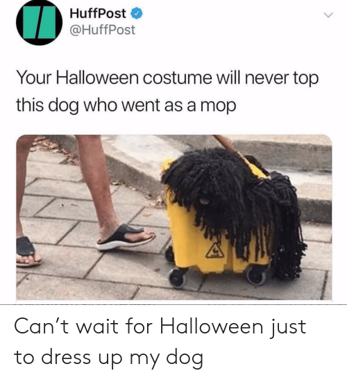 Huffpost: HuffPost  @HuffPost  Your Halloween costume will never top  this dog who went as a mop Can't wait for Halloween just to dress up my dog