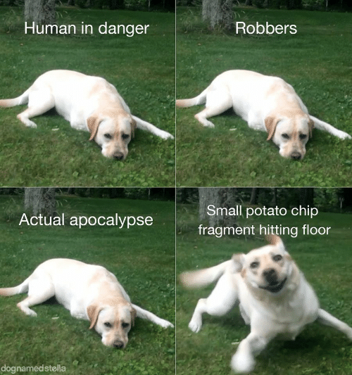 apocalypse: Human in danger  Robbers  Small potato chip  Actual apocalypse  fragment hitting floor  dognamedstella