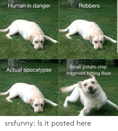 hitting: Human in danger  Robbers  Small potato chip  Actual apocalypse  fragment hitting floor srsfunny:  Is it posted here