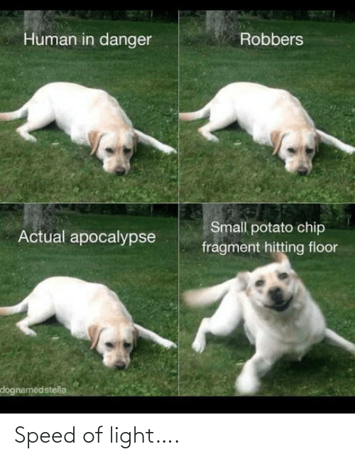 apocalypse: Human in danger  Robbers  Small potato chip  Actual apocalypse  fragment hitting floor  dognamedstella Speed of light….
