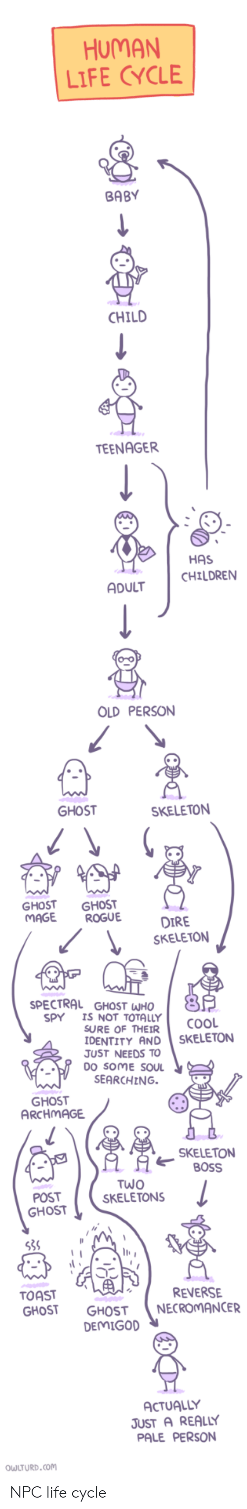Human Life: HUMAN  LIFE CYCLE  BABY  CHILD  TEENAGER  HAS  CHILDREN  ADULT  OLD PERSON  SKELETON  GHOST GHOST  MAGE ROGUE  SKELETON  SPECTRAL GHOST WHO  5  SPY I NOT TOTALLY cooL  SURE OF THEIR  IDENTITY AND SKELETON  JUST NEEDS TO  DO SOME SOUL  SEARCHING.  SKELETON  80SS  POST  SKELETONS  OST  TOAST  GHOST GHOST NECROMANCER  REVERSE  DEMIGOD  ACTUALLY  JUST A REALLY  PALE PERSON  OWLTURD.com NPC life cycle