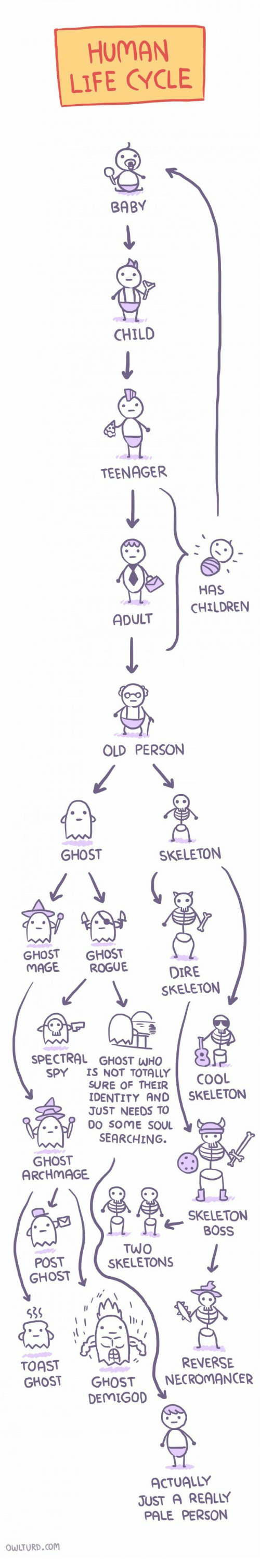 Human Life: HUMAN  LIFE CYCLE  BABY  CHILD  TEENAGER  HAS  CHILDRENN  ADULT  OLD PERSON  GHOST  SKELETON  GHOST GHOST  MAGE ROGUE  DIRE  SKELETON  SPECTRAL GHOST WHO  SPY IS NOT TOTALLY  SURE OF THEIR  COOL  DENTITY AND SKELETON  JUST NEEDS TO  DO SOME SOU  SEARCHING.  GHOST  ARCHMAGE  SKELETON  OSS  POST  GHOST  TWO  SKELETONS  la  539  TOAST  GHOST GHOSTNECROMANCER  REVERSE  DEMIGO  ACTUALLY  JUST A REALLY  PALE PERSON  WLTURD.com