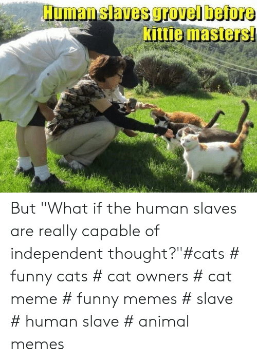 "Cats, Funny, and Meme: Human slaves grovel before  Kittie masters But ""What if the human slaves are really capable of independent thought?""#cats # funny cats # cat owners # cat meme # funny memes # slave # human slave # animal memes"