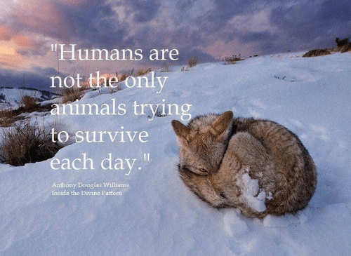 "Animals, Memes, and 🤖: ""Humans are  not the only  animals trying  to survive  each day.""  Anthony Douglas Williams  Inside the Divine Pattern"