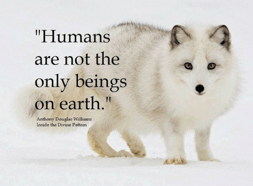 "Memes, Earth, and 🤖: ""Humans  are not the  only beings  on earth.""  Anthony Douglas Williams  Inside the Divine Pattern"