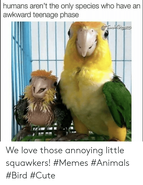 memes animals: humans aren't the only species who have  awkward teenage phase We love those annoying little squawkers! #Memes #Animals #Bird #Cute