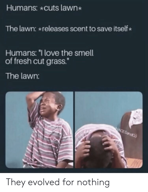 "Evolved: Humans: cuts lawn  The lawn: releases scent to save itself  Humans: ""I love the smell  of fresh cut grass.""  The lawn:  HACESandCo They evolved for nothing"