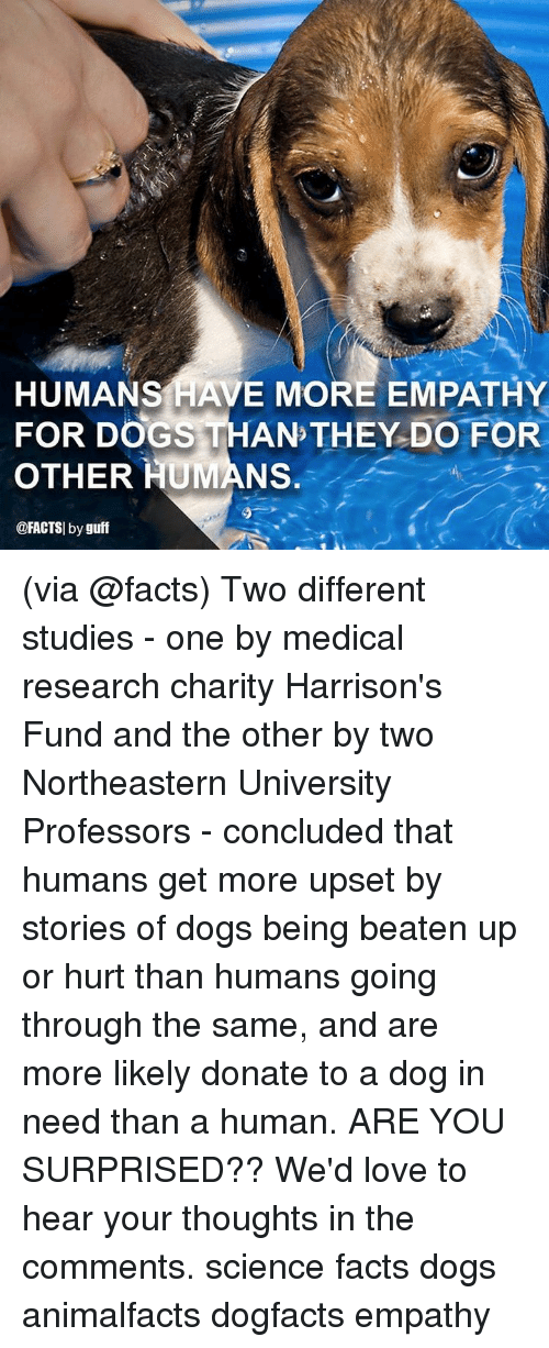 Are You Surprised: HUMANS HAVE MORE EMPATHY  FOR DOGS THAN THEY DO FOR  OTHER HUMANS.  @FACTSI by guff (via @facts) Two different studies - one by medical research charity Harrison's Fund and the other by two Northeastern University Professors - concluded that humans get more upset by stories of dogs being beaten up or hurt than humans going through the same, and are more likely donate to a dog in need than a human. ARE YOU SURPRISED?? We'd love to hear your thoughts in the comments. science facts dogs animalfacts dogfacts empathy