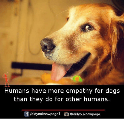 Dogs, Memes, and Empathy: Humans have more empathy for dogs  than they do for other humans  f/didyouknowpagel@didyouknowpage